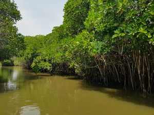 Pichavaram Mangroves (Pondicherry)- Majestic, Mystical and Magical!!!