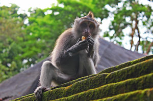 Sacred Monkey Forest Sanctuary 1/13 by Tripoto