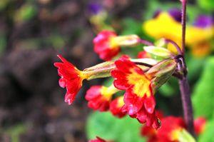 Chashme Shahi Gardens 1/6 by Tripoto