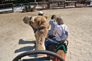 Camel Park 1/undefined by Tripoto