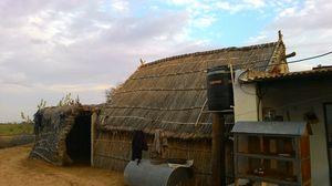 Frescos, black buck and farm experience in Shekhawati