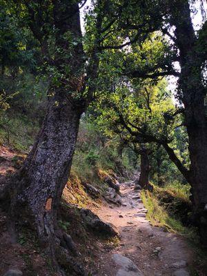 Trip to Pulga and camping at Bhandak Thatch