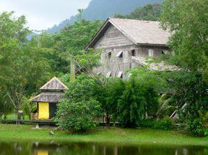 On The Wild Side: Borneo's Rainforests