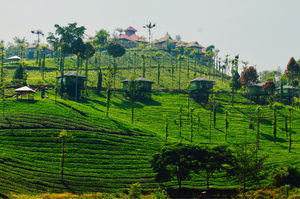 Escape Yourself Into The Greenery Of Nilgiris - Wild Planet Jungle Resort !!!