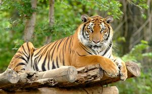The unexplored Tiger Reserve in India that should be on your bucketlist!