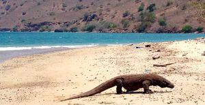 Komodo Island 1/undefined by Tripoto