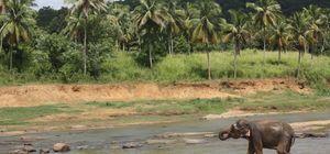 #SriLankaDiaries: The Colours of Kandy - Saanya Gulati