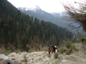 Kheerganga: 15kms to heaven !