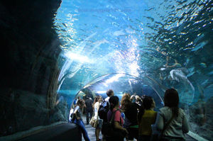 Siam Ocean World Bangkok Co. 1/4 by Tripoto