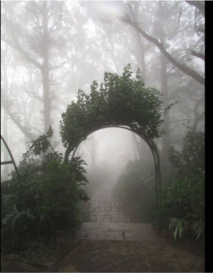 FOGGY AND MISTY PLACES TO VISIT IN INDIA DURING WINTER