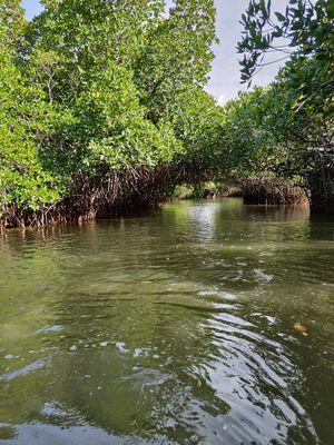 Unexplored & Beautiful places of South India - Pichavaram Mangrove Forests #SouthIndiaItenerary