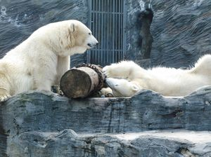 Prague Zoo 1/undefined by Tripoto