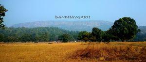 Trip to Bandhavgarh