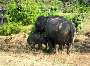Kaziranga National Park 1/118 by Tripoto