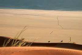 NamibRand Nature Reserve 1/undefined by Tripoto
