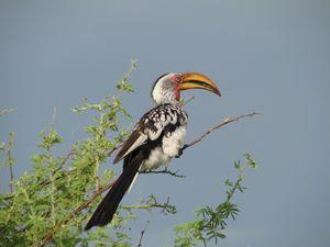 Etosha National Park 1/undefined by Tripoto