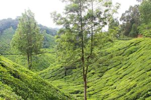 Weekend in Munnar