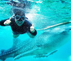 Oslob, Cebu: Swimming with the Whale Sharks