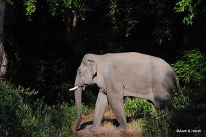 Wildlife Loving: Corbett Safari