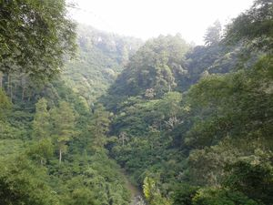 Hike through the lush Evergreen Djuanda Forest of Bandung, Indonesia!