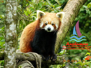 Darjeeling Himalayan Zoo#TripotoEnglish, #Darjeeling, #DarjeelingZoo