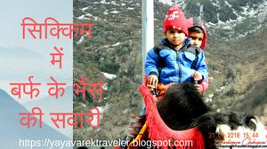 सिक्किम में बर्फ के भैंस की सवारी
