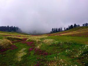 Gulmarg a beautiful meadows of flower