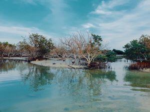 Mangrove forest in Qatar