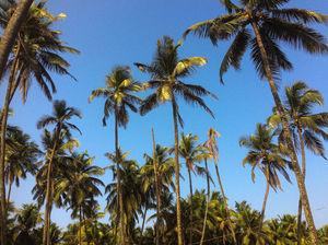 Figuring My Way To Delta Beach, Udupi