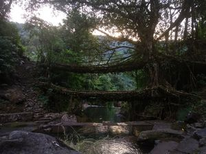 Double decker living root bridge - a dream come true #tripoto #northeastphotos