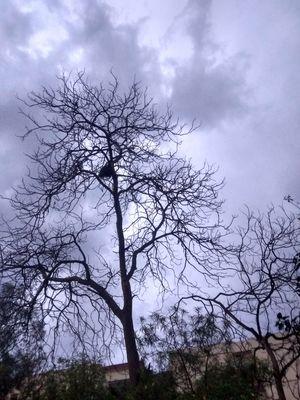 A Rainy April Evening in Delhi