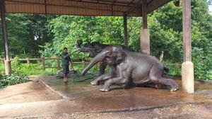 Pinnawala elephant orphange - Sri lanka