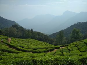 God's own country : Kerala