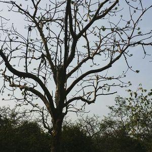 Beginners Trail at Sanjay Gandhi National Park