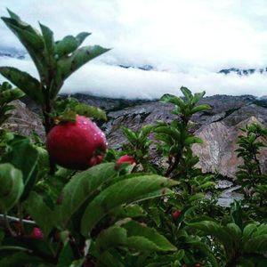 Kinnaur -  Untouched beauty in the lap of Himachal Pradesh