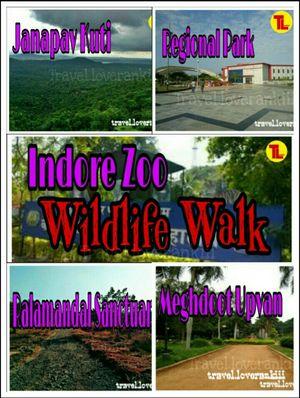 INDORE Thru my Eyes -- A WILDLIFE WALK