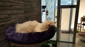 Welcome to the first cat café in Valencia, Spain