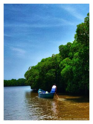 Mangrove forest? Just 80kms away from Pondicherry is Pichavaram