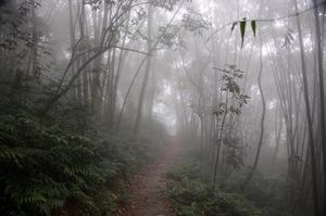 Ba Vi National Park of Hanoi, Vietnam - A weekend with the Mist! #notonTripoto