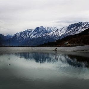 Auli or Alps? #Auli #gharshyalbugyal