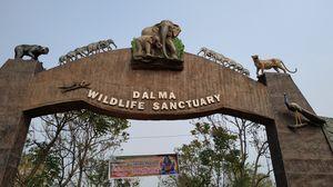 Into the Lap of Nature || DALMA WILDLIFE SANCTUARY