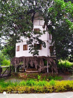 Tree House on a Mango tree
