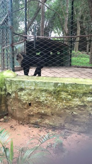 Weekend amidst the wild -Bannerghatta Biological Park