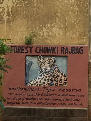Ranthambore Safari with family A road trip from Nawalgarh!!