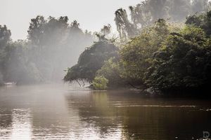 Bhitarkanika Mangrove Forest: A Mangrove In Odisha Visited By A Million Turtles Every Year