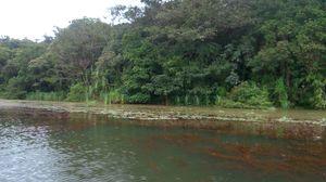 Pookode Lake 1/6 by Tripoto