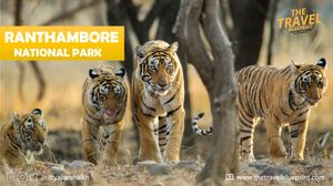 Weekend Getaway: Ranthambore National Park