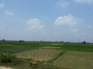 A Slice of Bengal Country Life