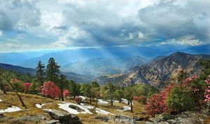 Chopta Valley- Beauty of Mother Earth