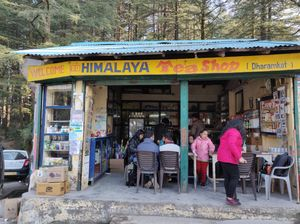 Triund Trek in Pictures, an experience to live in